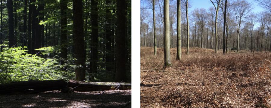 dichter vs gelichteter Wald